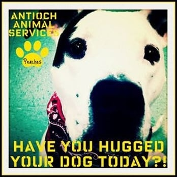 antioch animal services 17 photos 21 reviews animal shelters