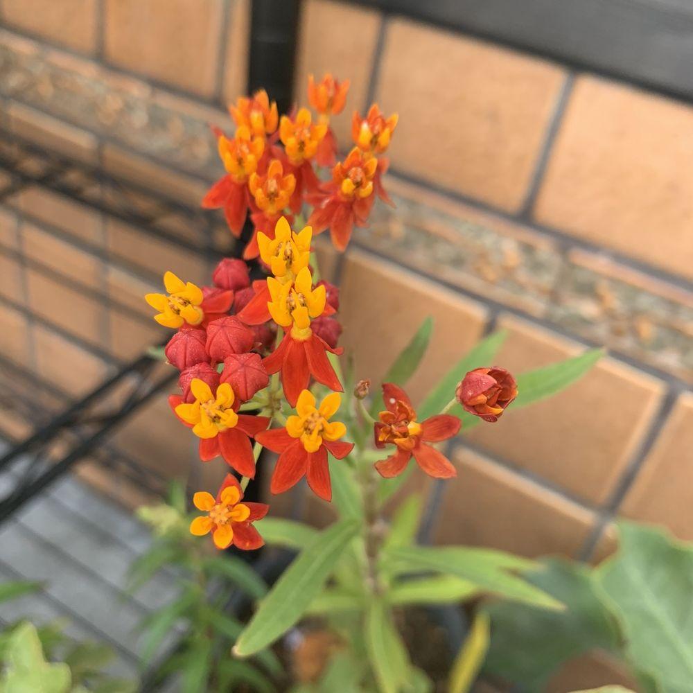 Plantlush: 124A E Santa Clara St, San Jose, CA