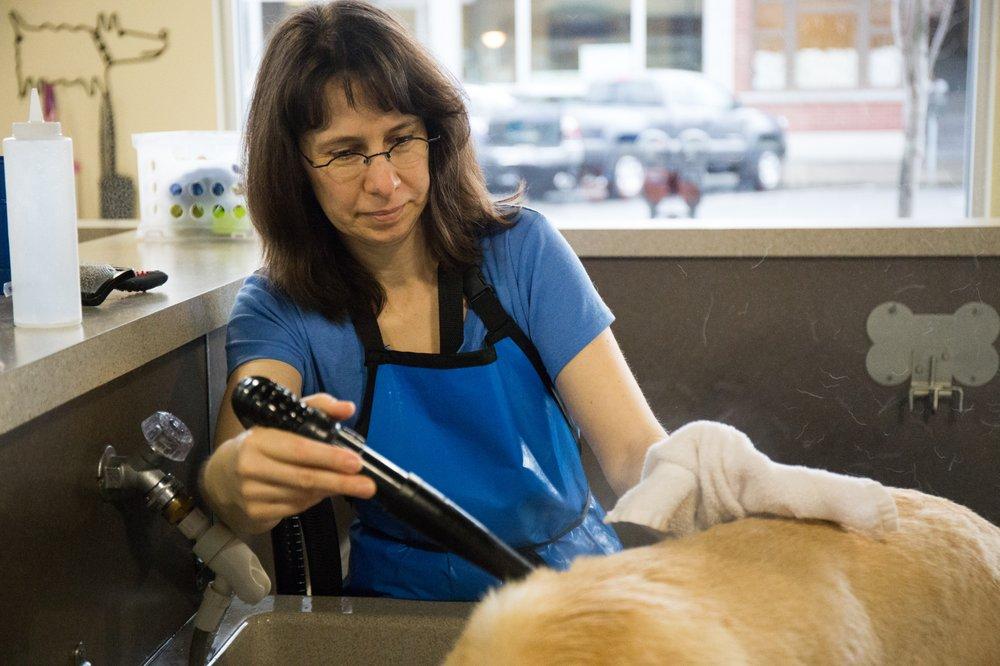 Shake & Shine Canine Wash and Deli: 1501 N State St, Bellingham, WA
