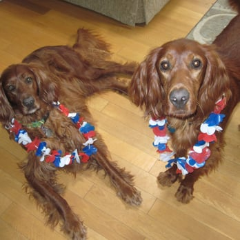 Smyth Irish Setters - 62 Photos & 12 Reviews - Pets - 14484