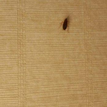 Photo Of Best Western Seven Seas San Go Ca United States Roach