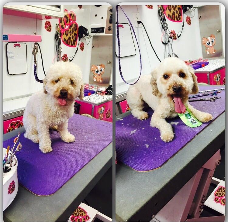 Sassypawsmobile yelp for 4 paws pet salon