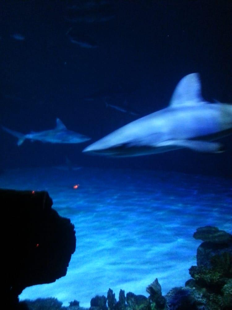 shark reef aquarium 2641 photos 891 reviews aquariums 3950 s