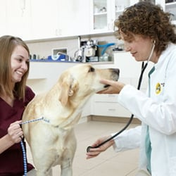 Edina Pet Hospital - 37 Photos - Veterinarians - 7701 ...