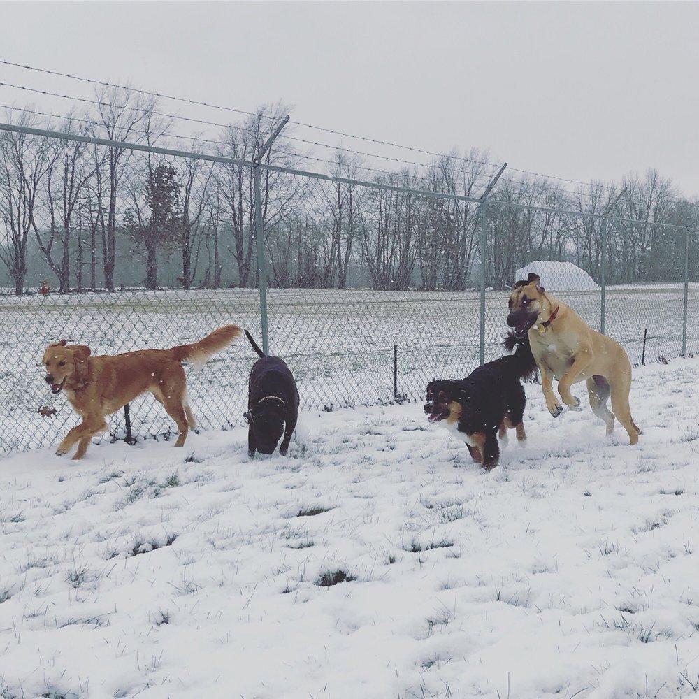 Bittersweet Pet Resort & Stables: 2100 Weaver Rd, Niles, MI