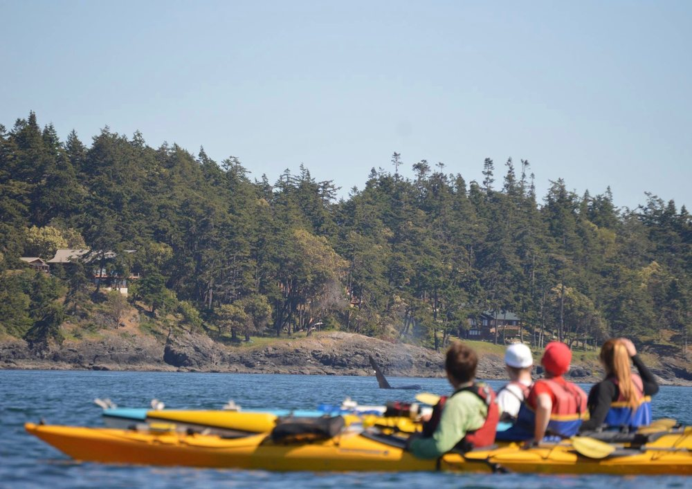 Kayak Nisqually: 4949 D'milluhr Dr NE, Lacey, WA