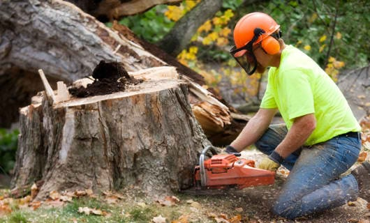Stump Grinding Services: 8351 Coon Club Rd, Medina, OH