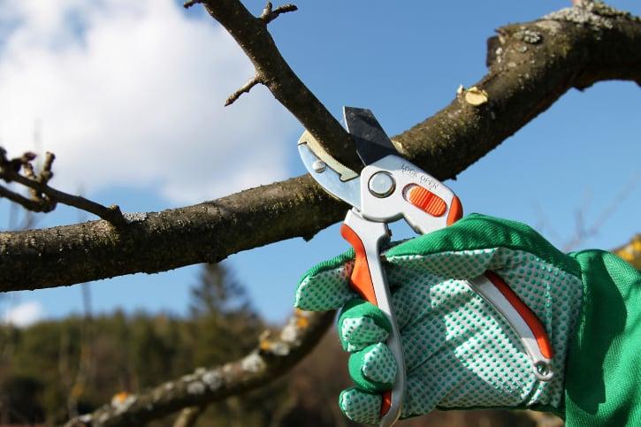 A-1 Expert Tree Service: 5155 Sullivan Gardens Pkwy, Kingsport, TN