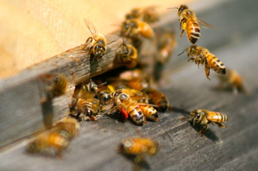 Valley Termite & Pest Control: 8504 Reading Rd, Cincinnati, OH