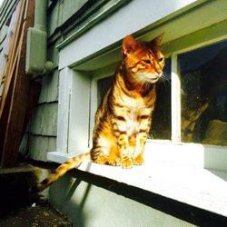 PAWS Cat City - (New) 22 Photos & 59 Reviews - Pet Stores - 5200
