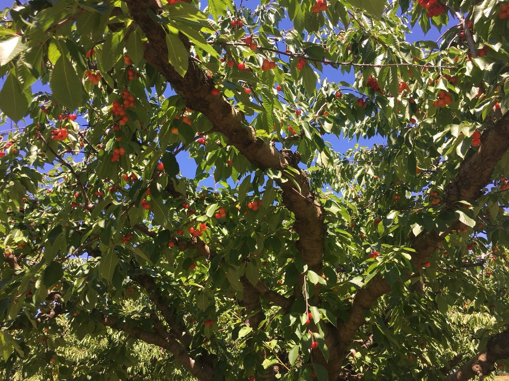 Cherry Hill Orchard and Market: 18207 N Sands Rd, Mead, WA