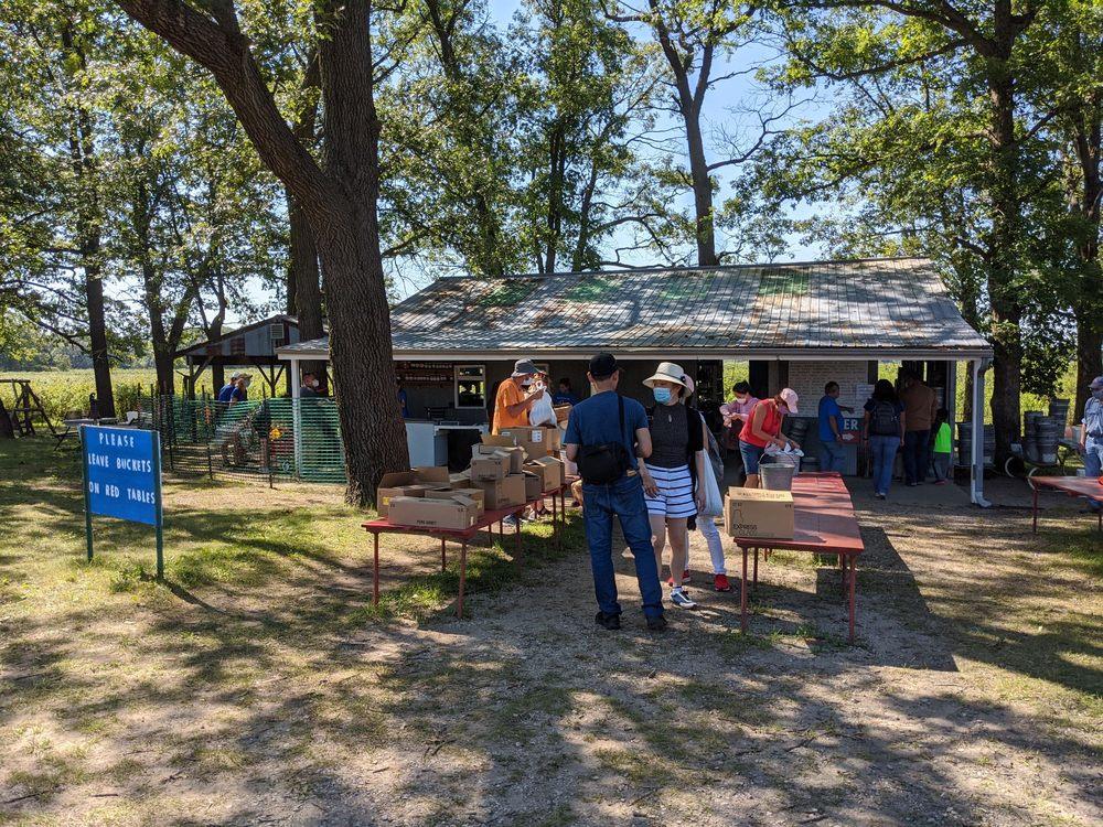 Tammen Treeberry Farm: 37131 Essex Rd, Wilmington, IL