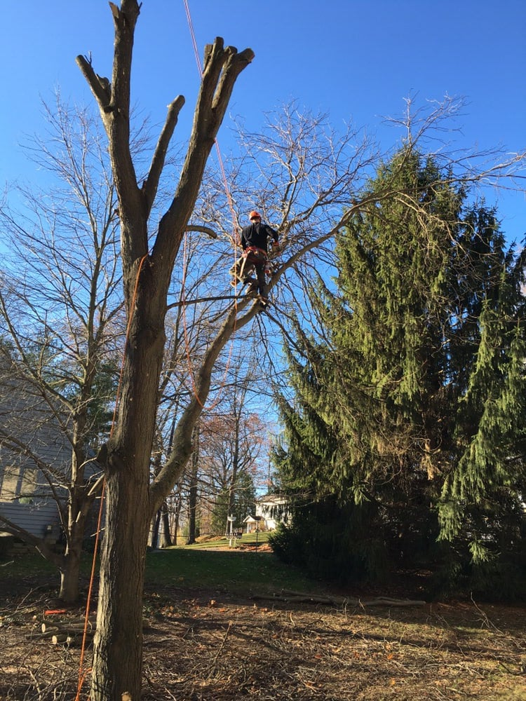 K&H Tree Service: Delton, MI