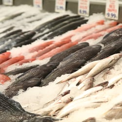 THE BEST 10 Seafood Markets in Queens, NY - Last Updated