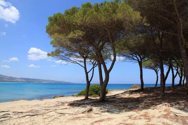 Gs obiettivo vacanze holiday rentals via agamennone for Vacanze a budoni