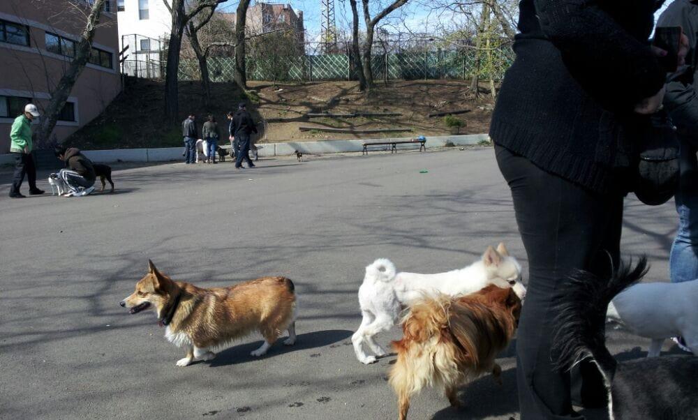 Dog Run Parks In Queens