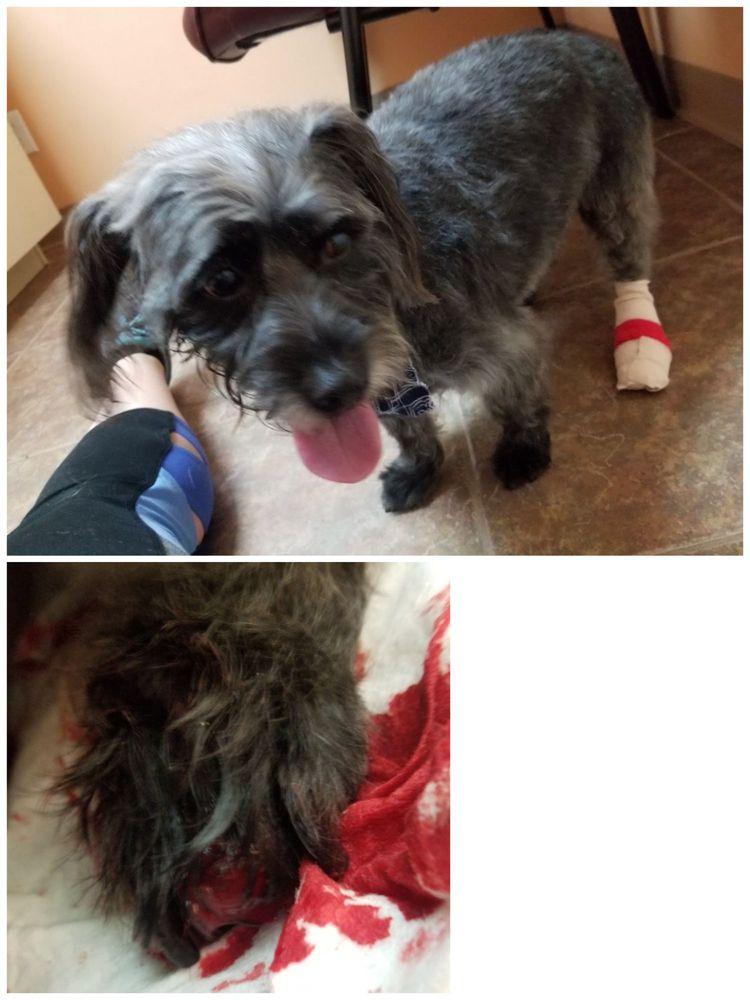 Noah's Bark Pet Grooming
