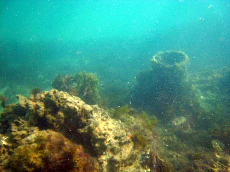 Photo Of Shark Bait Beach Gear Als Vero Fl United States