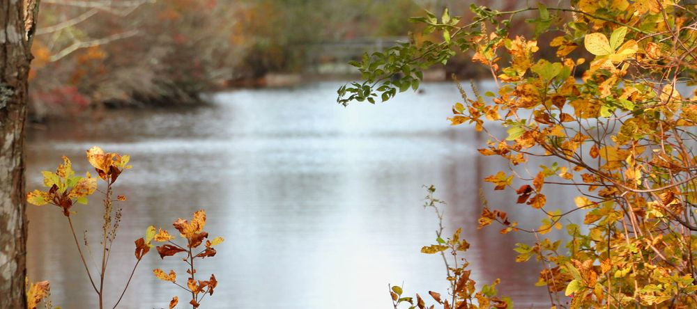 Connetquot River State Park: Sunrise Hwy, Bohemia, NY