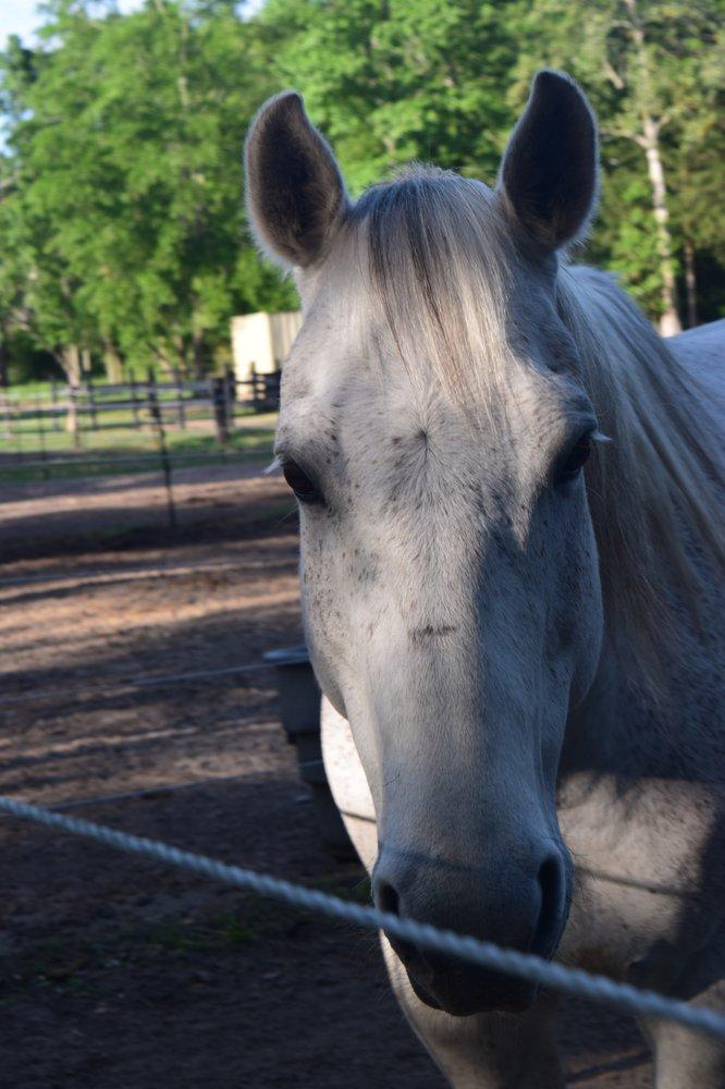 Iron Horse Stables: 11 Eden Ln, Cantonment, FL
