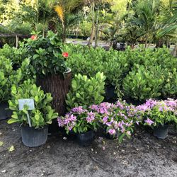 Photo Of All About Gardens Nursery Davie Fl United States