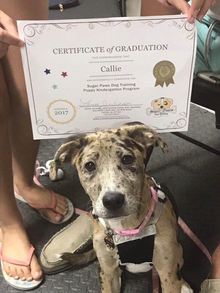 Sugar Paws Dog Training: 823 W Park Ave, Ocean, NJ