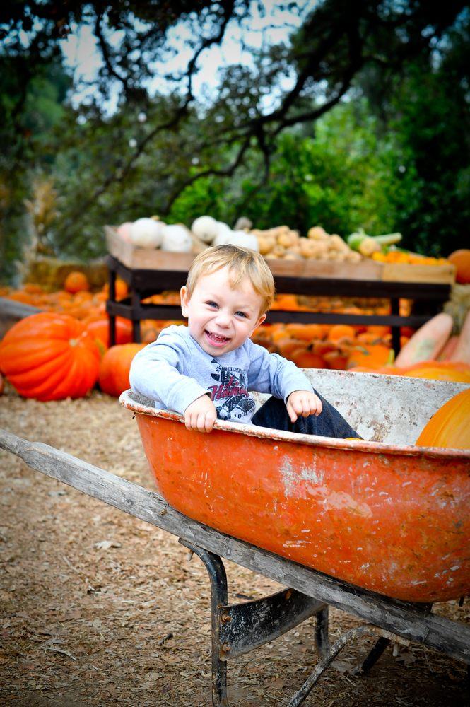 Boccali Ranch Pumpkin Patch