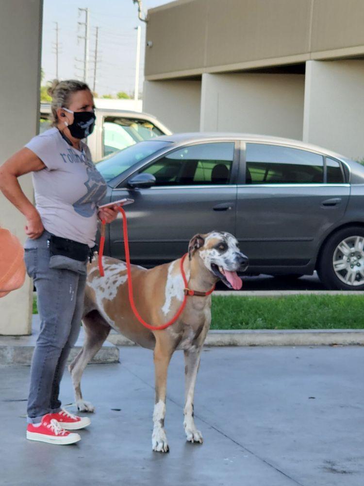 Anaheim Animal Care & Pet Hospital