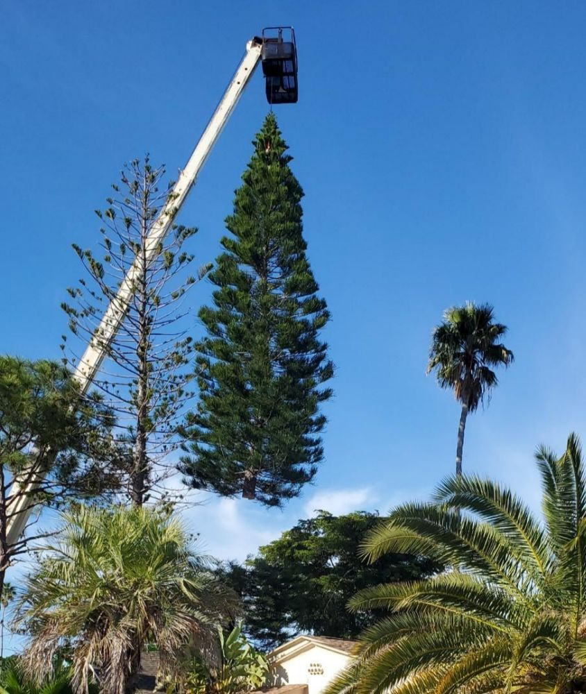 Greater Bay Area Tree & Crane Services: 10841 61st Ave N, Seminole, FL