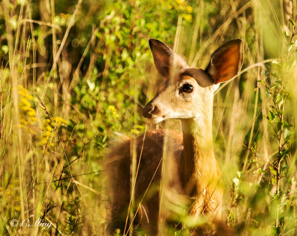 Seneca Creek State Park: 11950 Clopper Rd, Gaithersburg, MD