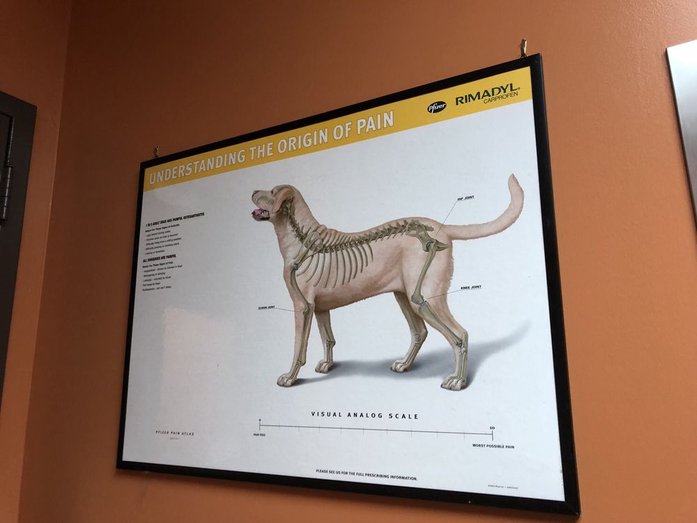 Clay-Chalkville Animal Clinic: 6415 Old Springville Rd, Pinson, AL