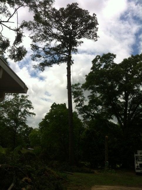 Treeco: Millbrook, AL