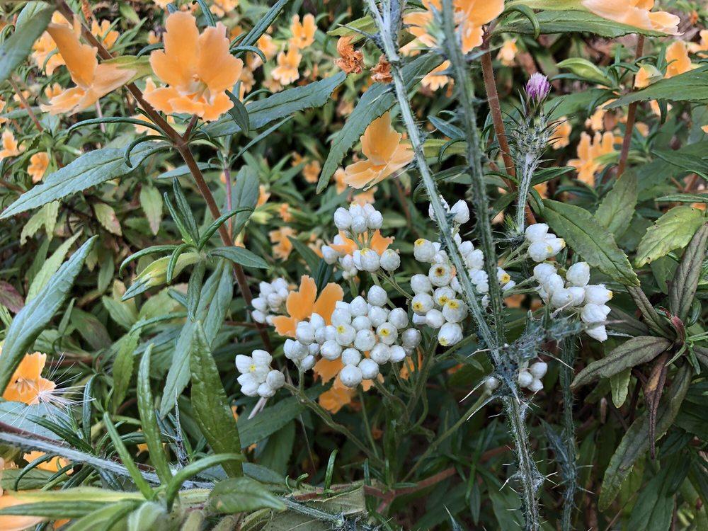 Triunfo Community Park: 980 Aranmoor Ave, Westlake Village, CA