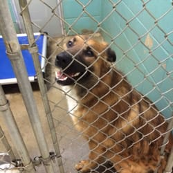 Defiance County Humane Society - Request a Quote - Animal Shelters