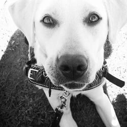 Little Angels Service Dogs Reviews
