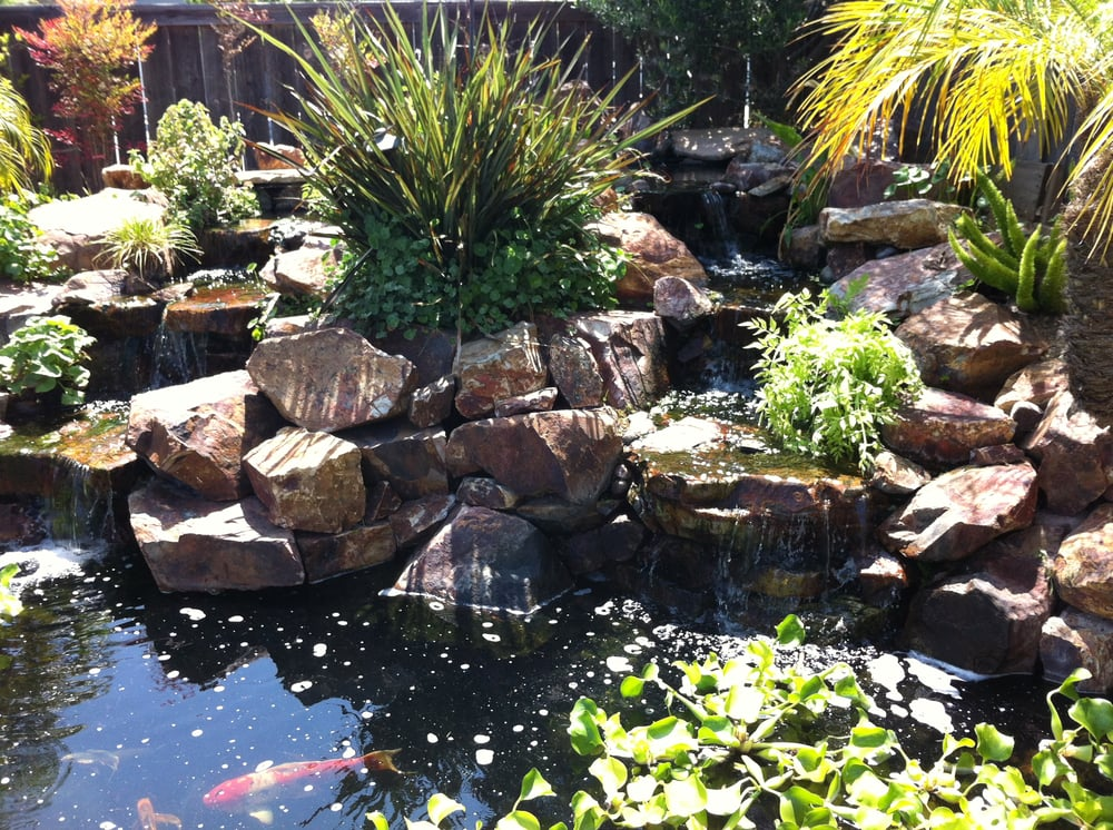 San diego pond and garden 27 reviews landscaping for Koi pond maintenance near me