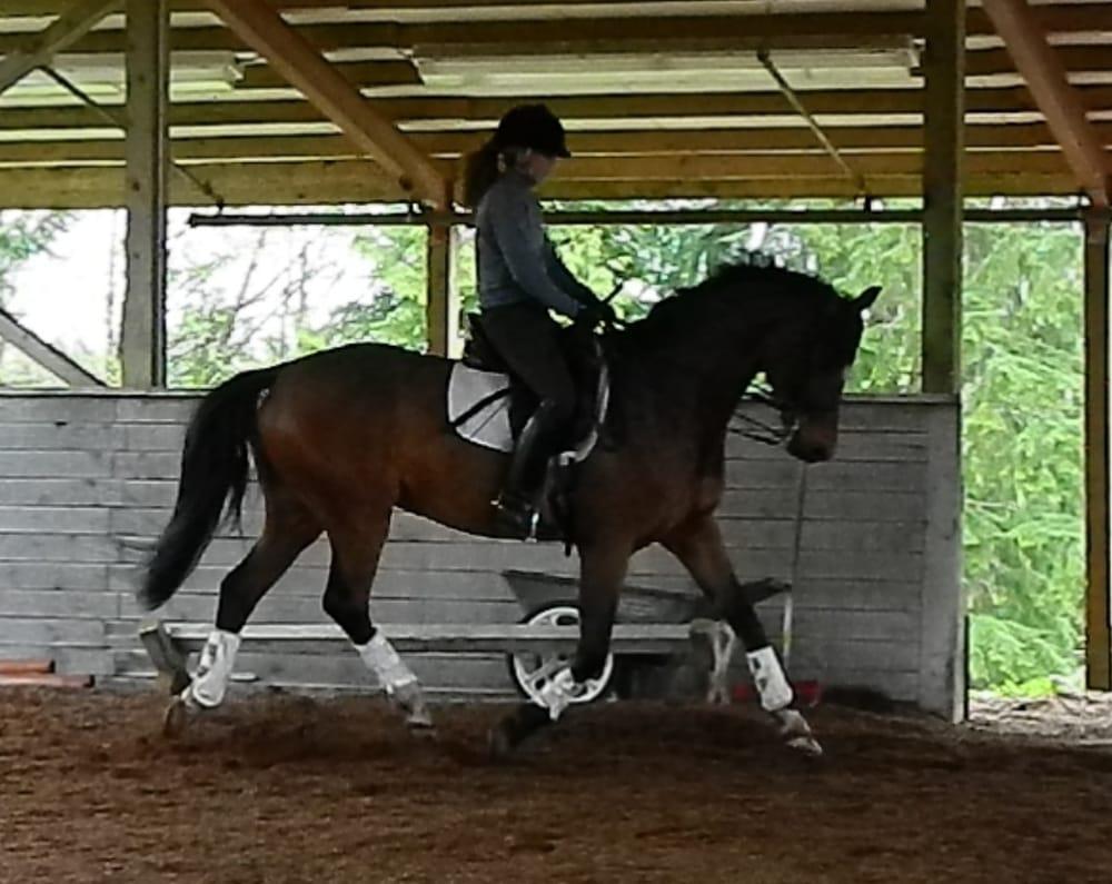 San Sebastian Equestrian Center Horseback Riding 25220