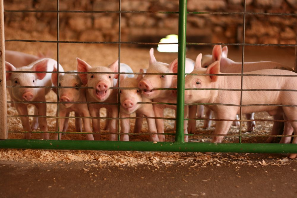 Mulberry Lane Farm: W3190 County Rd B, Hilbert, WI