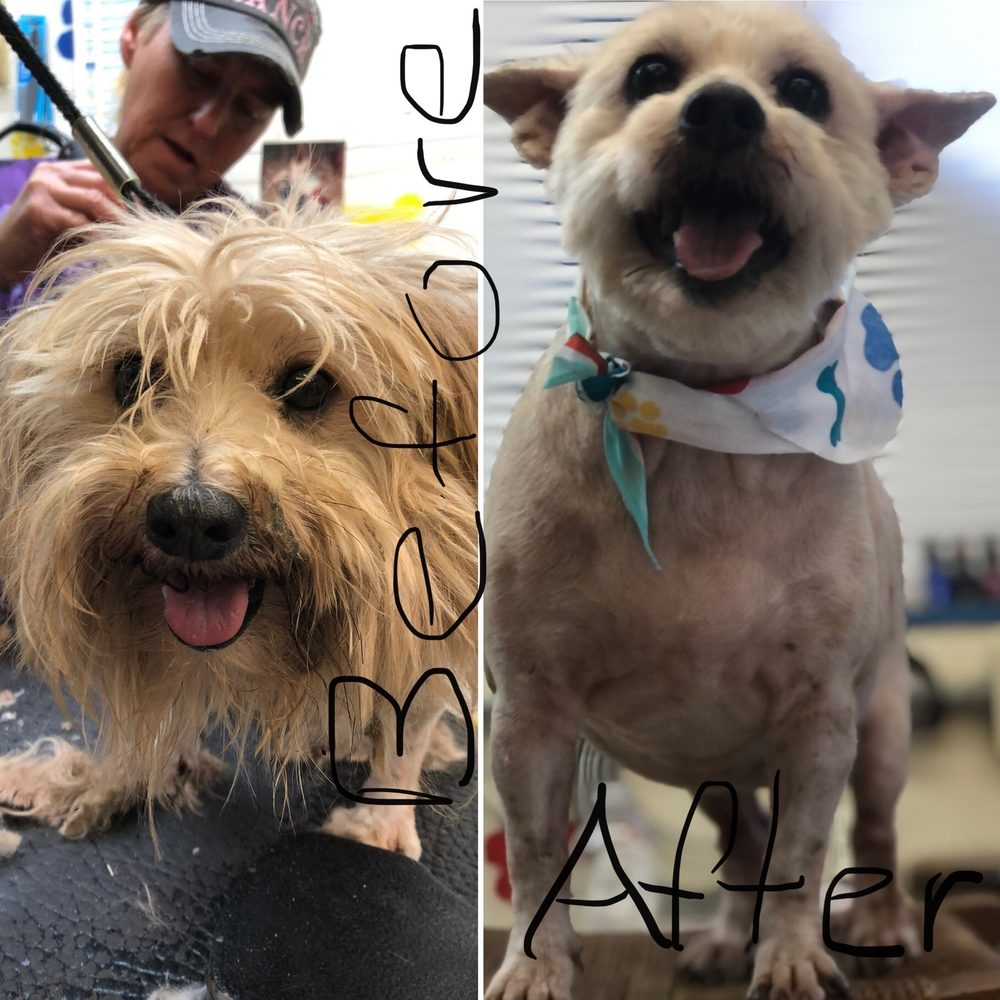 Joann's Four Paws Pet Grooming and Boarding: 1115 State Hwy 87 S, Hemphill, TX