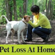 Pet loss at home home euthanasia vets 27 reviews veterinarians united photo of pet loss at home home euthanasia vets chicago il solutioingenieria Choice Image