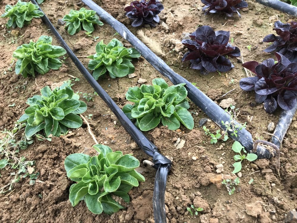 Earth Spring Farm: 366 Stought Rd, Carlisle, PA