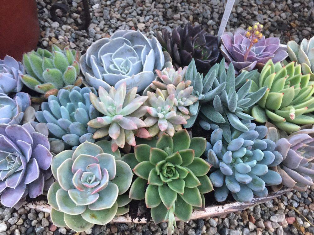Cherry Valley Nursery & Landscape Supply: 37955 Cherry Valley Blvd, Cherry Valley, CA