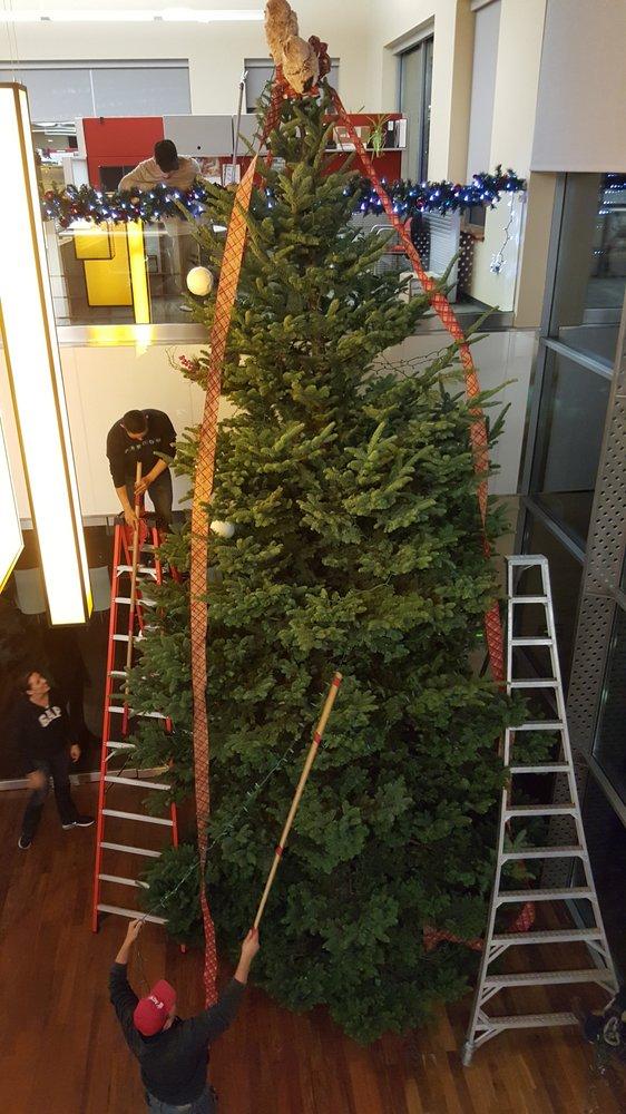Photos for MJW Christmas Trees - Yelp