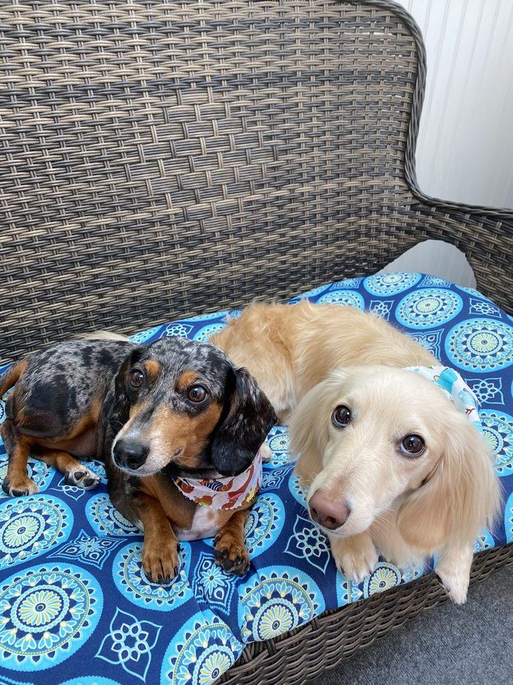 Bows & Bones Pet Grooming: 13570 Waterford Pl, Midlothian, VA