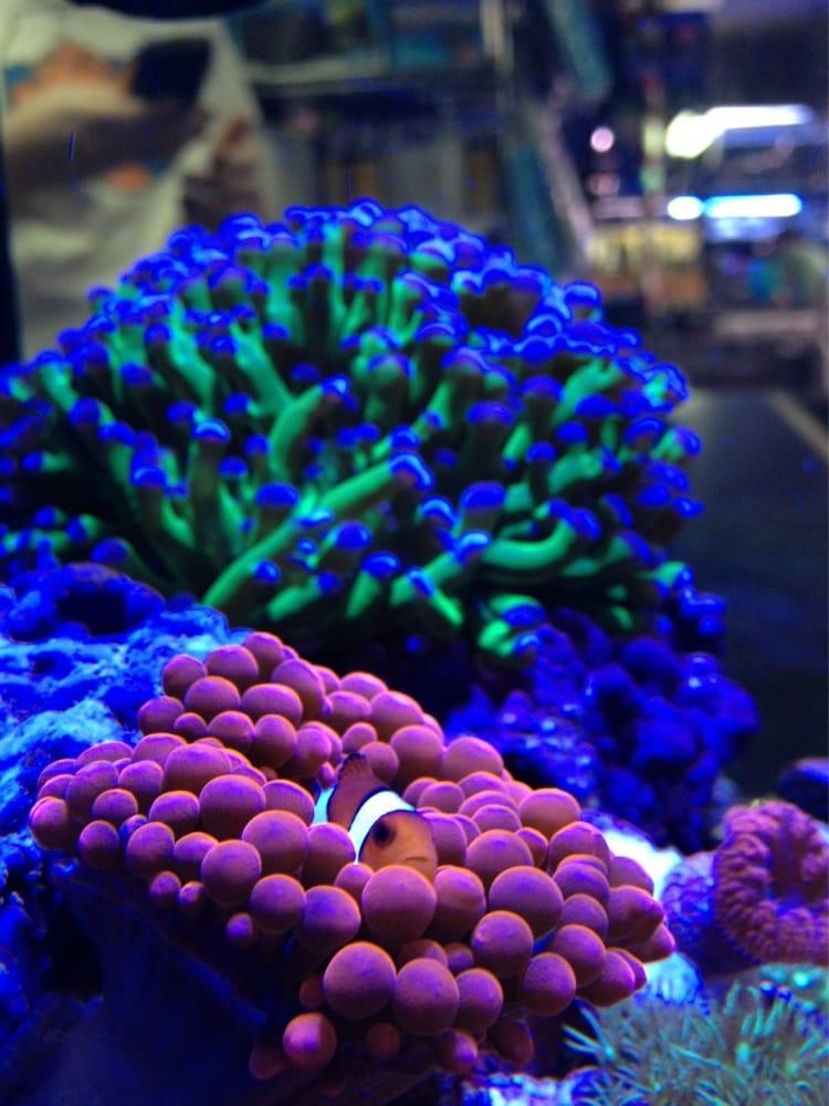 Aquarium Fish Tank ST500 Aquatop 15 Gallons - Gray
