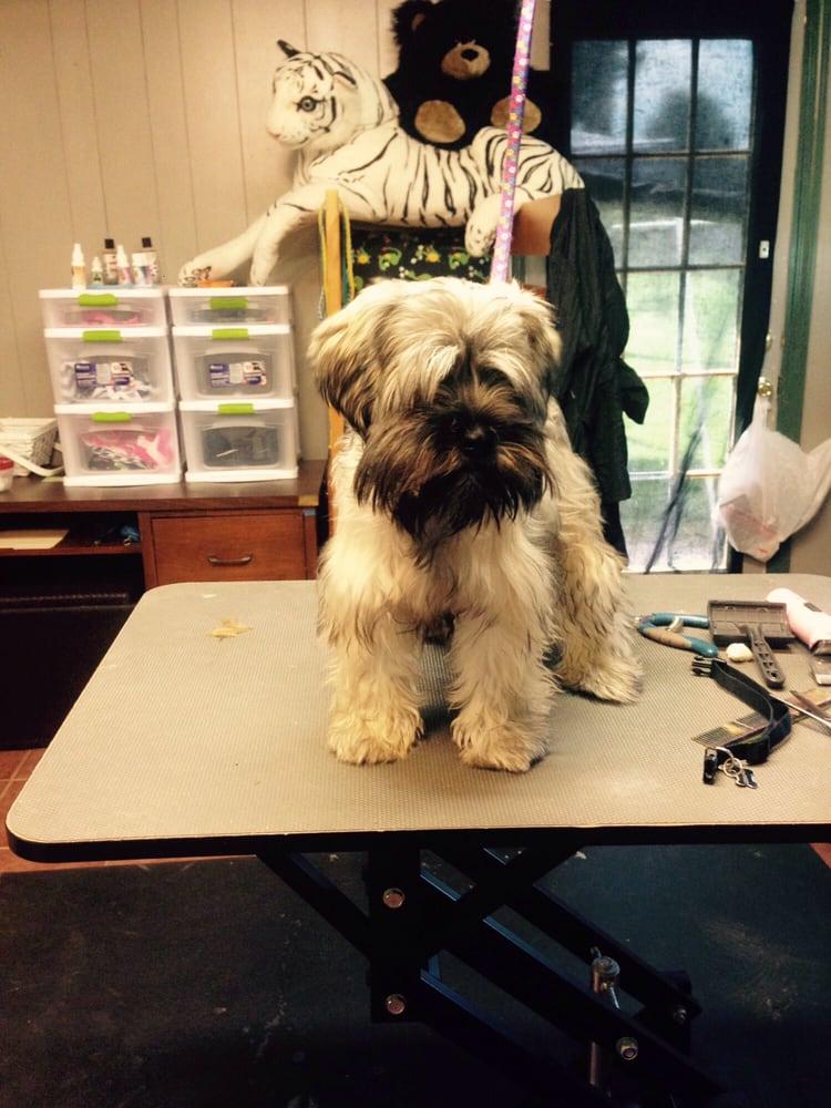 Classy Canine Grooming By Sole: 426 Noonday Ct, Houston, TX