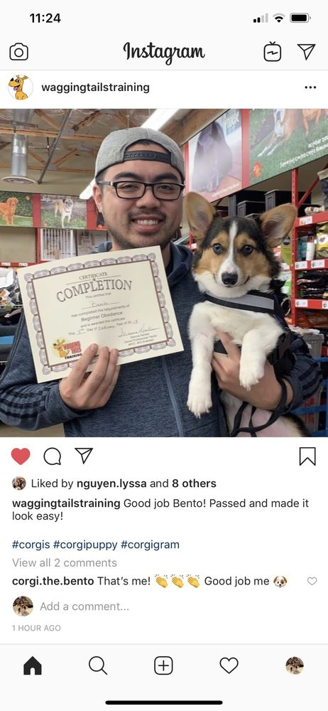 Wagging Tails Training: Brentwood, CA