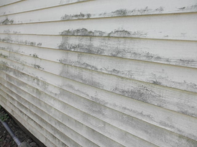 Remove Mold From Siding Of House 28 Images St Louis