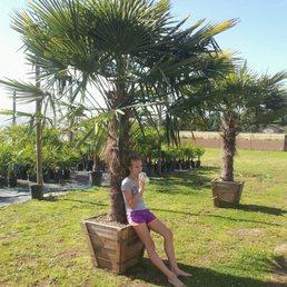 Photo Of Oregon Palm Nursery Woodburn Or United States
