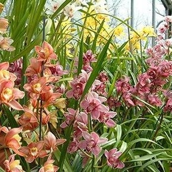 Photo Of UNC Charlotte Botanical Gardens   Charlotte, NC, United States.  Orchids In